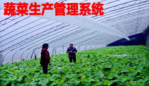 蔬菜生产管理系统
