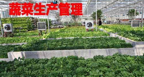 蔬菜生产管理