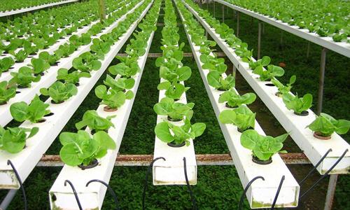 农业B2B网站